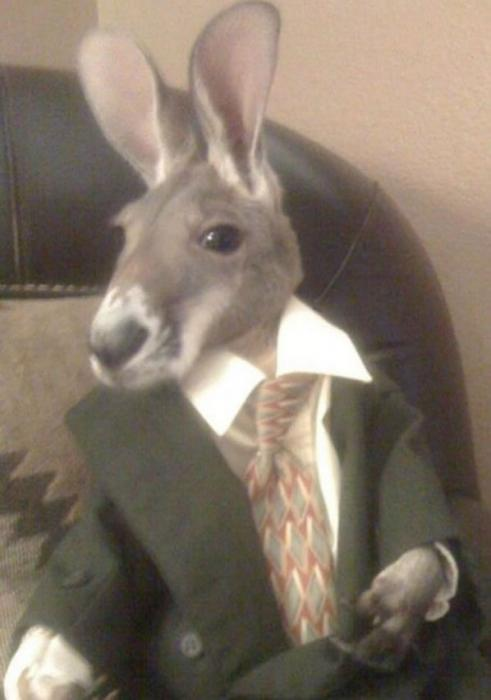 Baby Clothes With Kangaroos