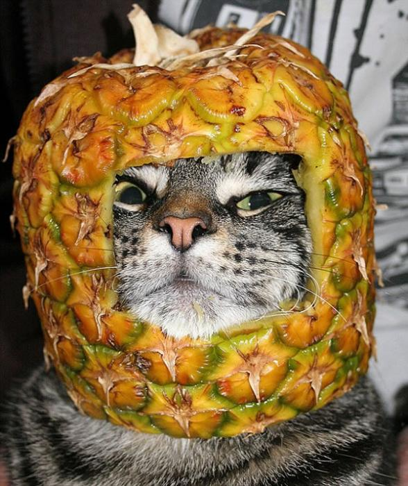 Fruit Hats On Cats