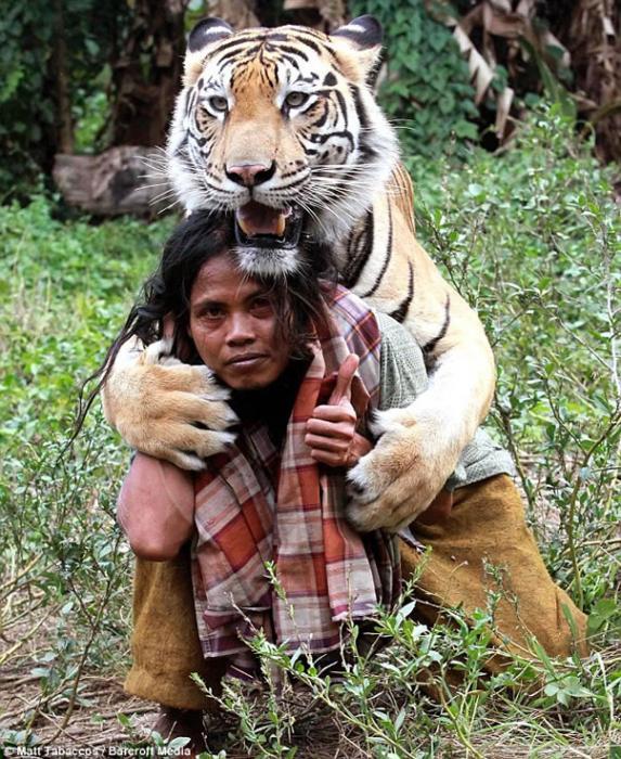 La amistad no tiene fronteras un tigre de bengala y un for Bengala asia