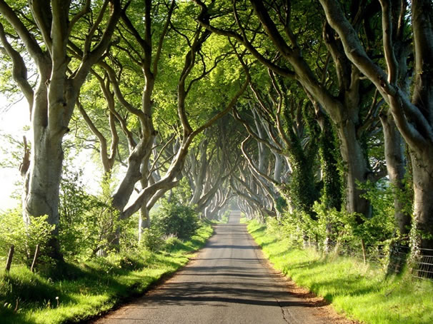dark-hedges-tunel-irlanda