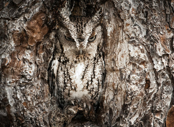 national_geographic5