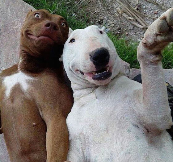 animals-selfies-0007