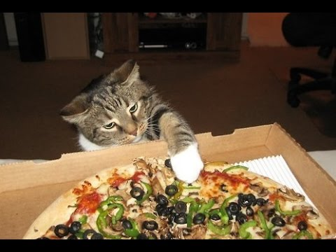 Video del día: Tiernos gatos hurtando pizza
