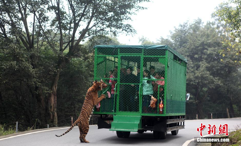 china-zoologico-animales-libres-4