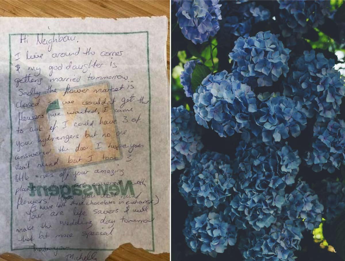 Emotiva-cartas-roba-flores